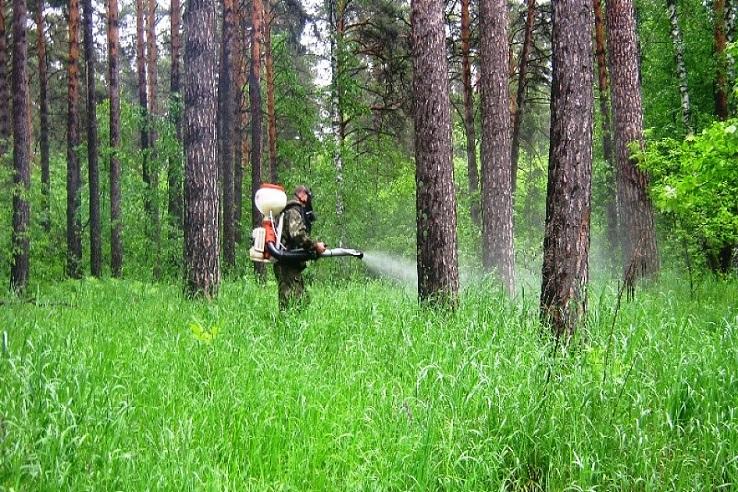 Обработка от клещей лесных массивов в Энгельсе